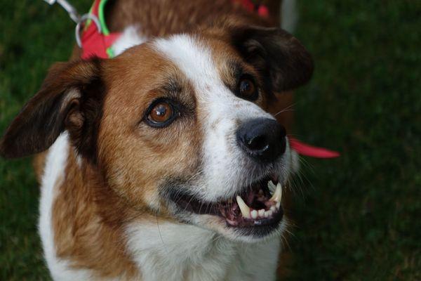 Mischlingsrude Mihau Sucht Ein Zuhause In Karlsruhe Hunde Kostenlose Kleinanzeigen Bei Quoka De