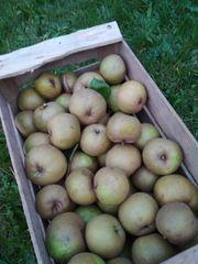 Bio Apfel Boskoop