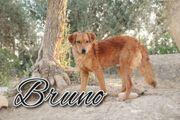 Haben Sie sich in Bruno
