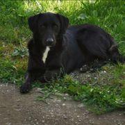 Traumhund Locky sucht ein liebevolles
