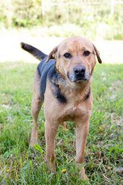SAX - ein sehr aktiver Hundebub