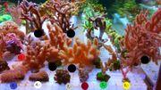 Meerwasser Ableger Update 1 1