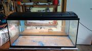 Aquarium 160 Liter von der