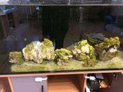 Lebendgestein- my Arka Reef Rocks