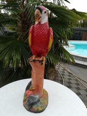 GFK Papagei