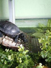 1 0 Wasserschildkröte ehem Notaufnahme