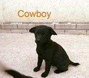 Cowboy- Zuhause gesucht
