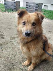 Traumhund Twin sucht eine Familie