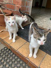 Katzen Kater zu Verschenken