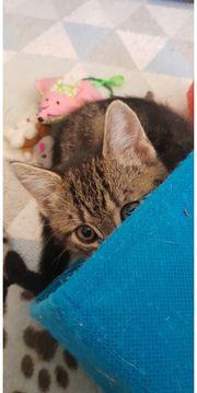 Katzenbabys In Bochum Tiermarkt Tiere Kaufen Quoka De