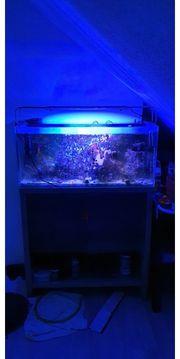 Fluval Reef M90 Meerwasseraquarium