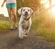Gassi gehen Spaziergänge Hundesitting