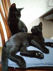 Katzen Crios und Rea suchen