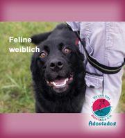 Feline - hat viel Herz zu