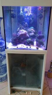 Meerwasser Seewasser Aquarium MP Scubacube