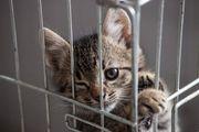 Lucica Katze aus dem Tierschutz
