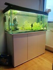 muss dringend weg Aquarium 300l