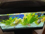 Aquarium mit Fische und viel