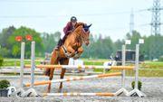 Pferdepfleger m w d Teilzeit
