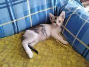 Tierschutz Kitten