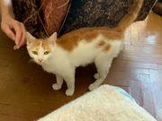 Utah- liebe Katzen Dame sucht
