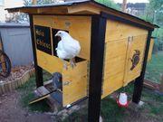 Hühnerstall selber bauen die perfekte