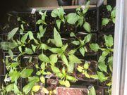 Mini solawi Gemüsekiste Gemüse auf