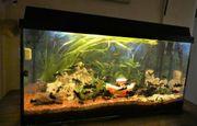 Aquarium komplett mit Fischen