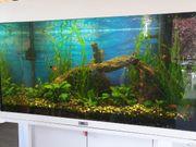 Juwel Aquarium 125 l