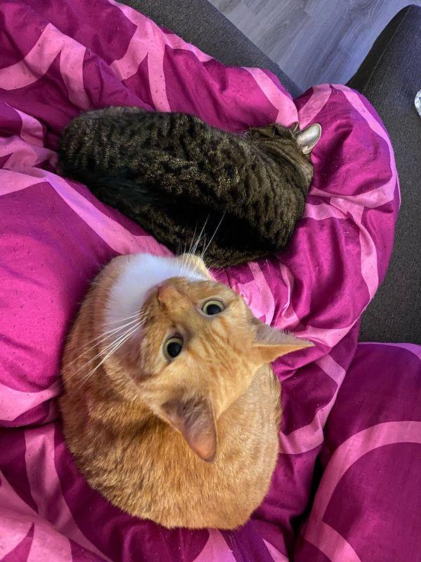2 Katzen suchen schweren Herzens