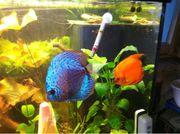 Suche Warmwasser Fische