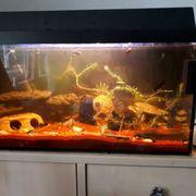 Apuarium mit Fischen deko und