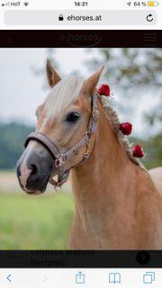 Ich suche ein Reitbeteiligungs Pferd