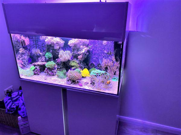Meeresaquarium 250 Liter komplett abzugeben