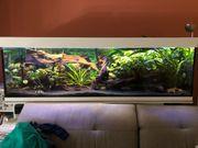 Aquarium 200x60x60 incl LED programmierbar