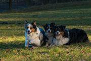 Hundemodels gesucht