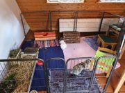 Liebevolle und kompetente Kaninchen-Betreuung