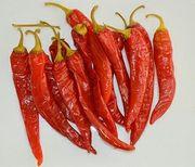 Peperoni Saatgut Lombardi rot scharf
