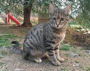 Zinnie ruhige Katzendame ca 5