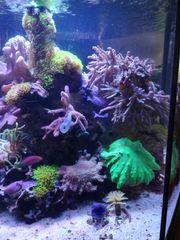 Meerwasser Fische Korallen komplett