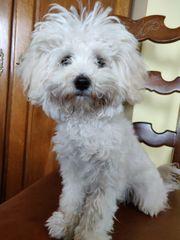 Malteser 6 Monate alt