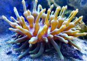 Set mit 30 Korallen