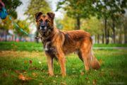 Ein besonderer Hund für Kenner