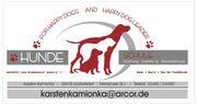 Hundeschule Welpenschule Jung- und Erwachsenenhundeausbildung