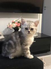 BKH Kitte