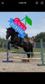 Pony sucht Rb