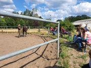 Pferdeboxen mit Paddocks und Weidegang