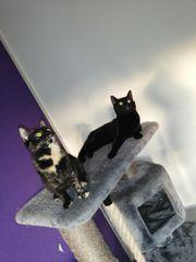 2 katze zu verschenken