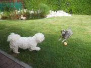 Die Hundepension für die kleinen