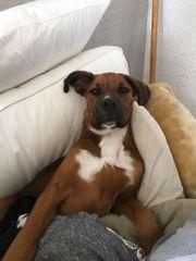 Hundetraining in Zwickau